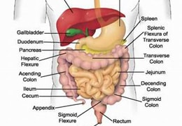 Alimentary System Drugs
